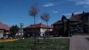 Chwasty i uschnięte drzewa na Placu Okulickiego