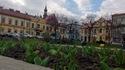 Tulipany na bocheńskim Rynku, 17 III 2014